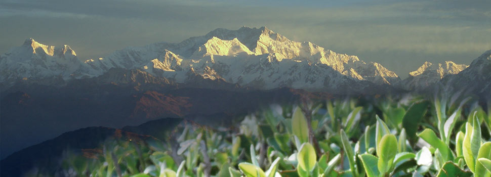 The magic of mystical Darjeeling Himalayas