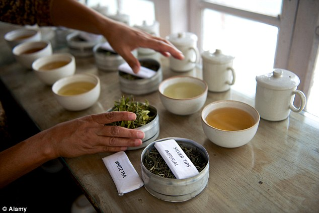 Rare tea picked every 108 years on a full moon night in June